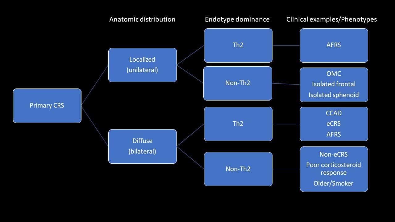 sinus specialist harvey sydney sinusitis classification